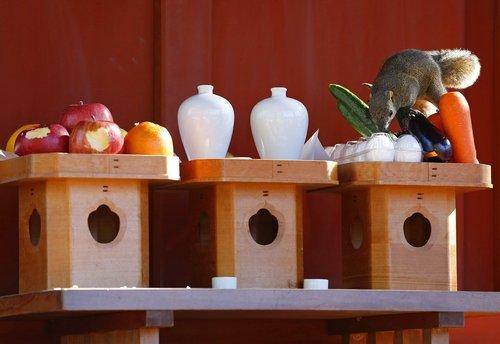 تغذیه یک سنجاب از خوراکی های معبدی در شهر کاماکورا ژاپن