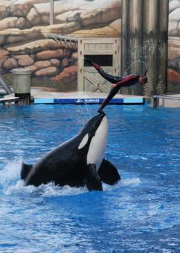مرگ دلفین 36 ساله آکواریوم اورلاندو آمریکا در 36 سالگی