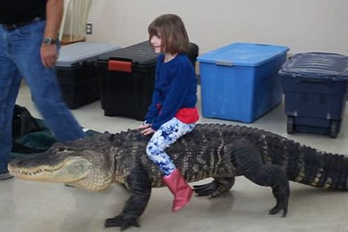 ترسناک ترین جشن تولد دنیا , وحشتناک ترین کادوی تولد , کادوی تولد متفاوت ,  تمساح سواری دختر کوچک