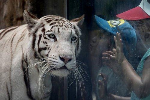 باغ وحش شهر لیما پایتخت پرو