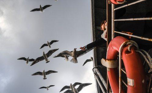 غذا دادن به مرغان دریایی در کشتی تفریحی – استانبول