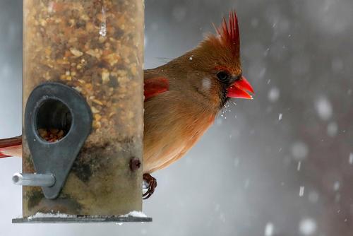 درست کردن لانه هایی مخصوص برای پرنده ها در فصل سرد و برفی شهر نیویورک