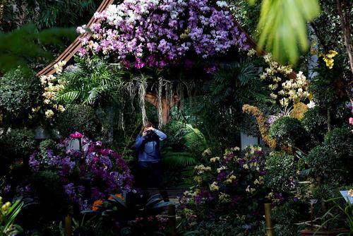 نمایشگاه سالانه گل ارکیده در باغ گیاه شناسی نیویورک