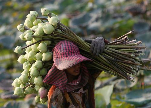 بازار گل فروشان در کامبوج