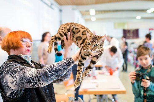 نمایش بین المللی گربه در وولرا سوییس