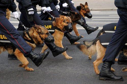 رژه صدمین سالگرد تاسیس نیروهای پلیس در کشور بلاروس – مینسک