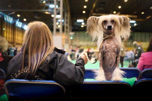 نمایش سگ های خانگی در بیرمنگام