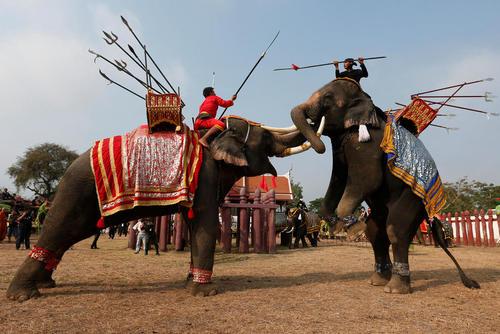 آیین های روز ملی فیل در تایلند