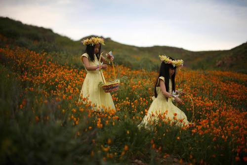 طبیعت بهاری در کالیفرنیا آمریکا