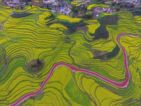 تصویری هوایی از شالیزار- چین