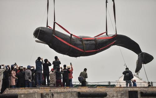 آزاد کردن یک وال عظیم الجثه که در تورهای ماهیگیری ساحل شهر هویژو چین به دام افتاده بود
