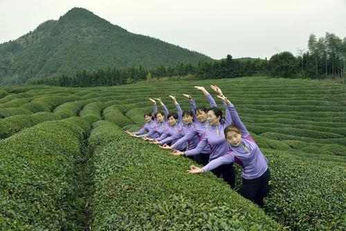 تمرین یوگا در زمین های کشت چای – چین