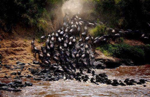 عبور از رودخانه مارا در کنیا