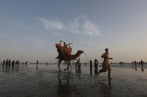 شترسواری در ساحل کراچی پاکستان