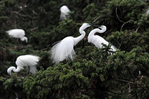 پارک جنگلی شیانگ شان در شرق چین