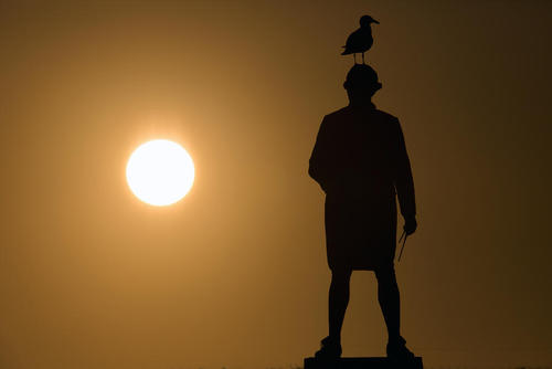 نشستن مرغ دریایی روی سر مجسمه