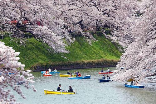 قایقرانی در رود مِگورو در شهر توکیو ژاپن