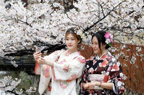 سلفی گرفتن در مقابل شکوفه های درخت گیلاس – توکیو