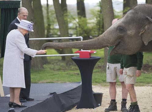 غذا دادن ملکه بریتانیا به یک فیل در باغ وحش
