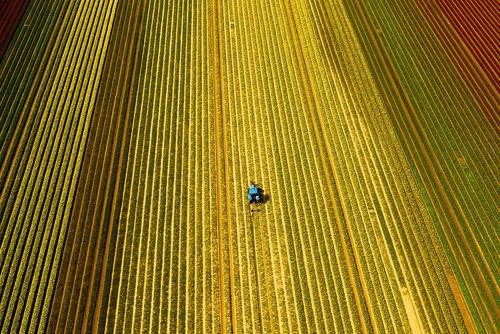 زمین کشاورزی در نورفولک بریتانیا
