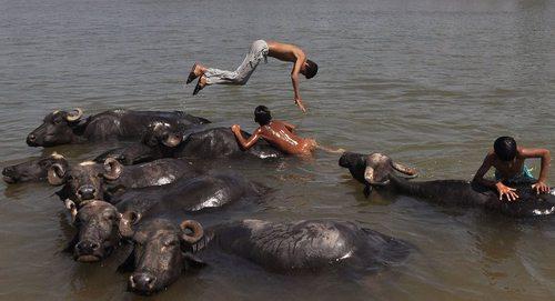 آب تنی در رود تاوی در جامو هند