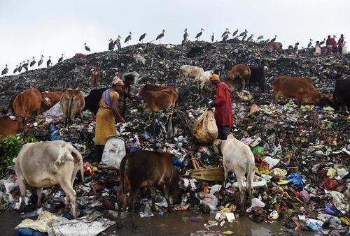 جمع آوری زباله های قابل بازیافت در گواهاتی هند در روز جهانی زمین