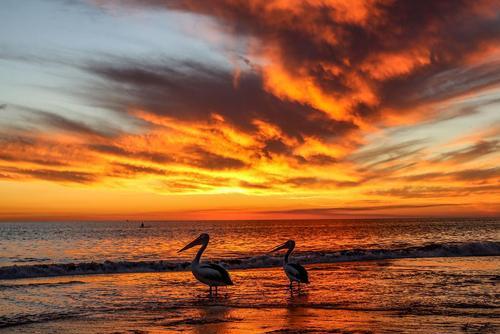 غروب آفتاب در ساحل شهر آدلاید استرالیا