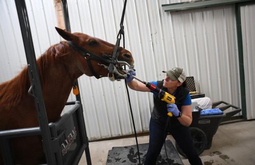 جراحی دندان روی یک اسب – کلرادو آمریکا