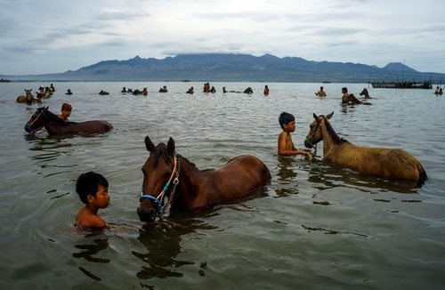 شستشوی اسب ها در رودخانه – اندونزی