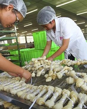عکس خلاقیت عکس چین طراحی معماری کارخانه طراحی ساختمان بزرگترین کارخانه اخبار چین