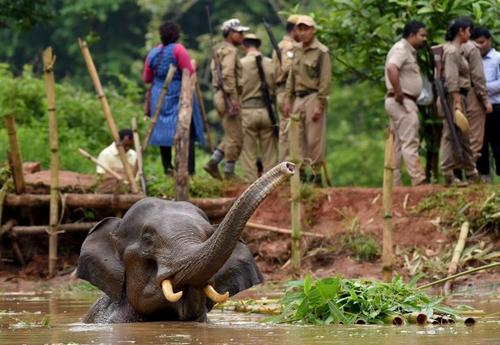 گرفتار شدن یک فیل در آب های عمیق یک رودخانه در گواهاتی هند