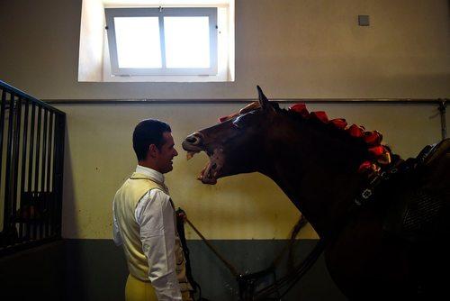 شیهه اسب به روی اسب سوار – پرتغال