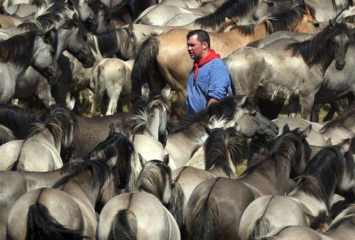جشنواره سالانه اسب وحشی – آلمان