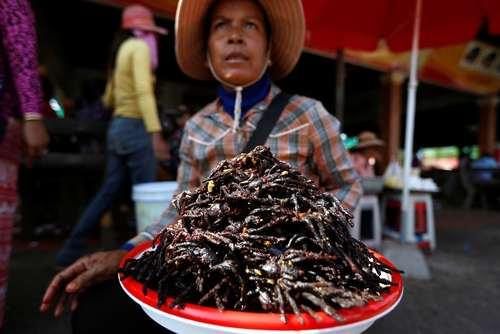 فروش رُتِیل سرخ شده در بازاری در کامبوج