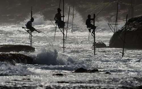روش جالب ماهیگیری در سریلانکا