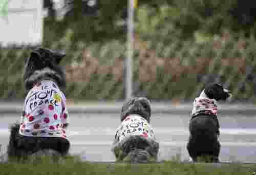 سگهای خانگی مشغول تماشای مسابقات  دوچرخه سواری