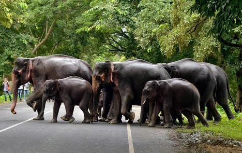 یک پارک ملی در ایالت آسام در شمال هند