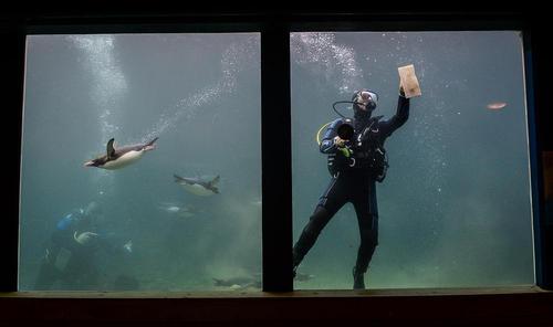 تمیز کردن شیشه های آکواریوم تورگوای – بریتانیا