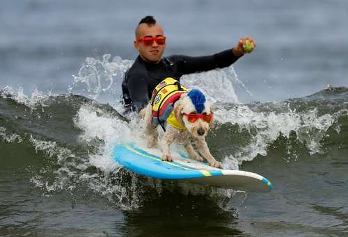 مسابقات جهانی موج سواری سگها در ساحل لیندا مار در کالیفرنیا آمریکا
