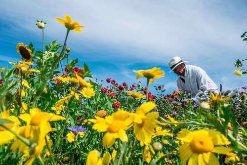 جشنواره سالانه گل در شهر مدلین کلمبیا