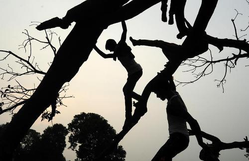 بازی نوجوانان هندی روی درخت – الله آباد