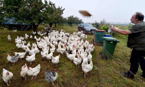 یک مزرعه تولید تخم مرغ ارگانیک در آلمان