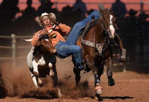 رقابت های گاوچرانی در استرالیا