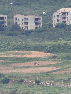 کشاورزان کره شمالی در حال کار روی زمین زراعی شان در آن سوی حصار مرزی با همسایه جنوبی
