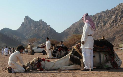 جشنواره قربان در صحرای تبوک عربستان سعودی