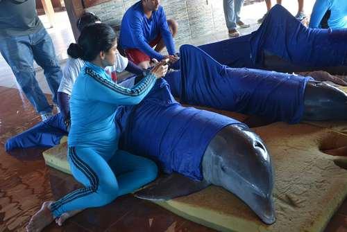 انتقال دلفین ها به یک مکان امن در پی نزدیک شدن توفان