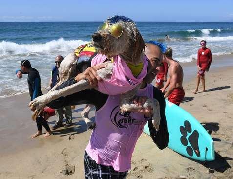 مسابقات سالانه موج سواری سگ ها در ساحل هانتینگتون در ایالت کالیفرنیا آمریکا