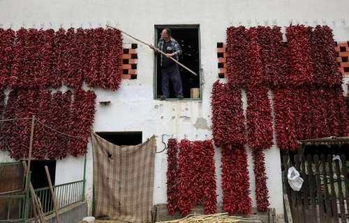 خشک کردن فلفل قرمز روی دیوارهای یک خانه روستایی در صربستان