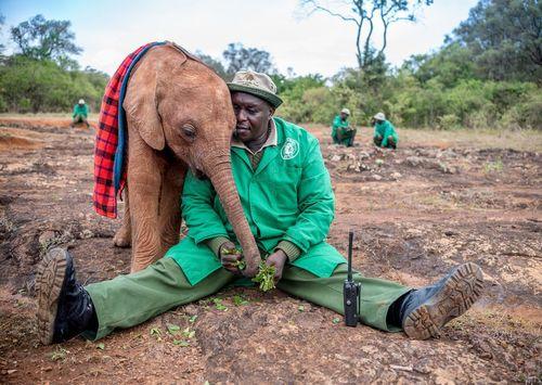 رابطه نزدیک کارمند یک پارک ملی در کنیا با یک بچه فیل