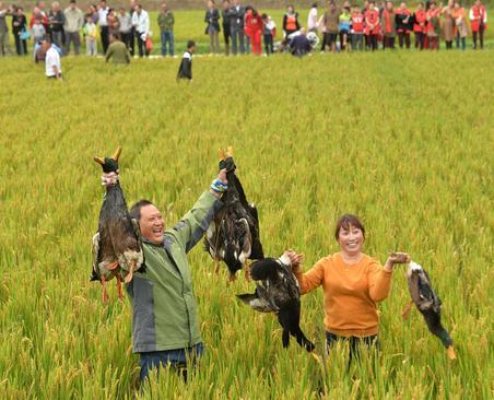 شکار اردک برای خوراک تعطیلات روز ملی چین